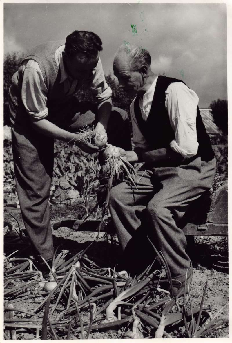 Two men looking at turnips in a vegetable garden.