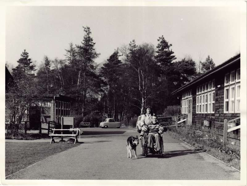 Woman pushing a man in a wheelchair who is walking a dog alongside, with trees and buildings in the background
